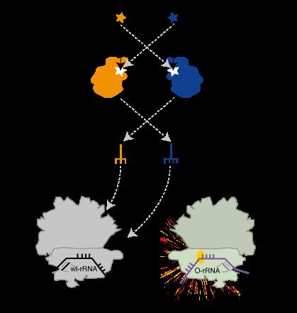 Unnatural Amino Acid Synthesis Unnatural Amino Acids in