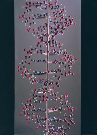Large ball and spoke model of DNA built by Alexander Barker, for the International Science Pavilion, Brussels World Exhibition, 1958.