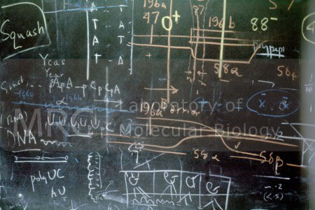 Blackboard used by Sydney Brenner and Francis Crick showing markings in different coloured chalks, c. 1962. (Probably taken in