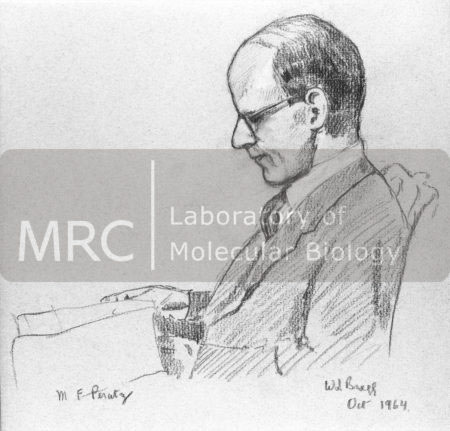Pencil drawing of Max Perutz by William Lawrence Bragg, October 1964.