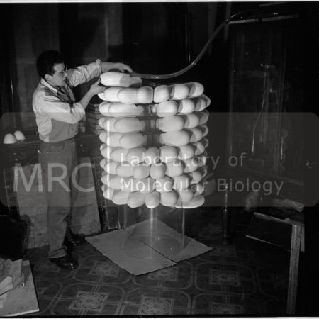 The sculptor John Ernest constructing a model of the tobacco mosaic virus, photographed by John Finch. Aaron Klug commissioned Ernest to build the model for the International Science Pavilion at the Brussels World Exhibition in 1958. More photographs from this series can be seen at the Models & Artefacts section of the website.