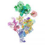 Structure of a human spliceosome before 5' splice site transfer
