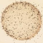 Mutant worms feeding alone