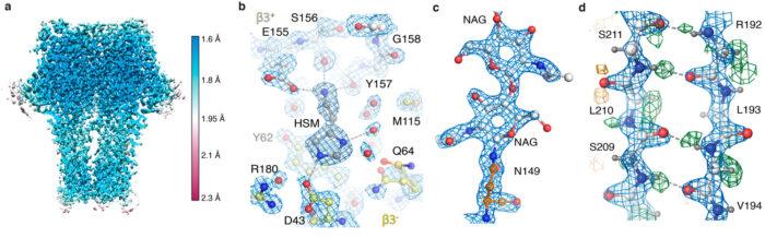 GABAA receptor map snapshots