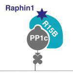 New method identifies a selective inhibitor of PPP1R15B, a potential target for Huntington's disease