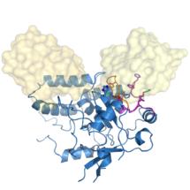 Cezanne–Lys11 diubiquitin complex structure
