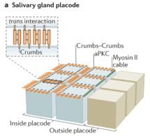 Crumbs-schematic-NRMCB-700