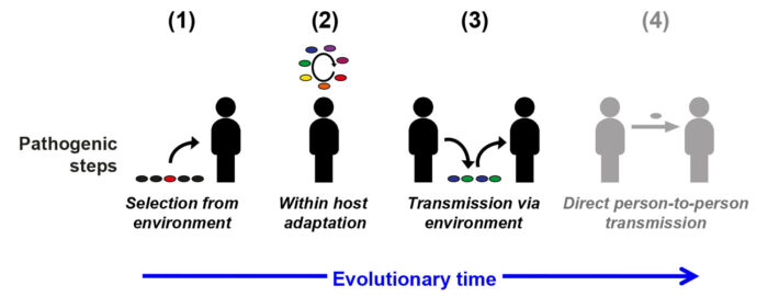 Steps involved in mycobacterial pathogenic evolution
