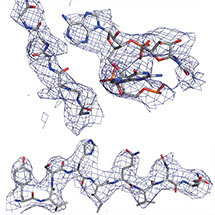 High Resolution Ribosome Structure
