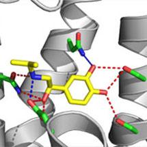 Hormones Activate G-Protein