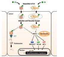 Leo James - New Mechanism of Antiviral Immunity