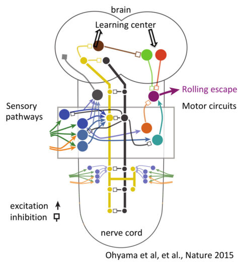 Circuitry for sensing punishments and mediating escape