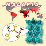 Malaria World map; proteasome structure; new anti-malarial