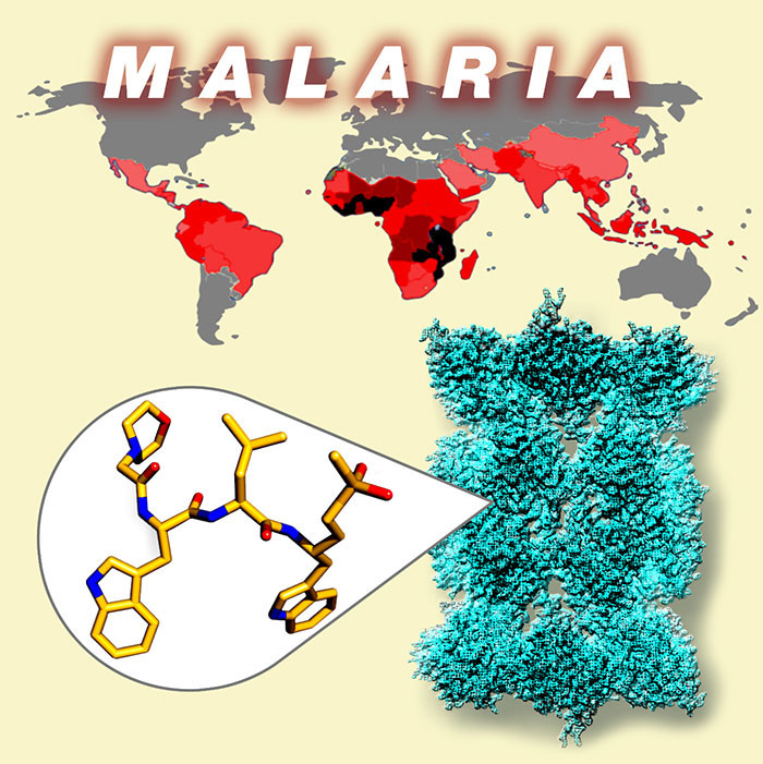 the prevention of malaria biology essay Malaria - research task user description: search for better health topic outlines the, cause, transmission, host response, treatment, prevention and control of malaria syllabus dot point : 35 gather and process information to trace the historical development of our understanding of the cause and prevention of malaria.