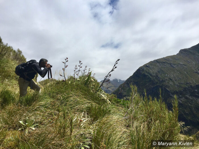 Manu Hegde in New Zealand