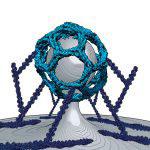 Clathrin mediated endocytosis
