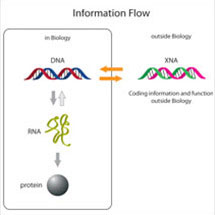 New Genetic Polymers
