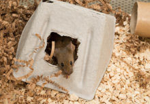 mouse in cardboard house