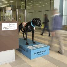 Horace the black dog
