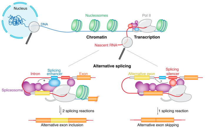 Regulation of alternative splicing is coupled with transcription