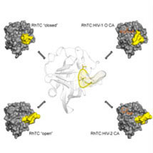 Shape Shifting Protein