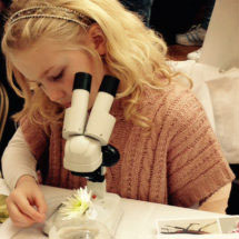 Stereomicroscope Challenge