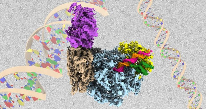 Cryo-EM structure of the Fork Protection Complex (Tof1 in yellow, Csm3 in green) bound to the CMG helicase (blue, brown and grey) in the presence of DNA and an additional factor (Ctf4, purple)