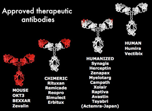 Approved Therapeutic Antibodies