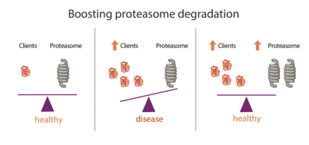 diagram boosting the proteasome