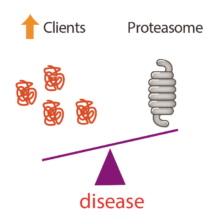 diagram boosting the proteasome (part)