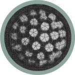 Electron micrograph image