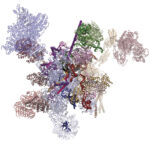 The structure of the human post-catalytic spliceosome reveals novel proteins that promote mRNA formation