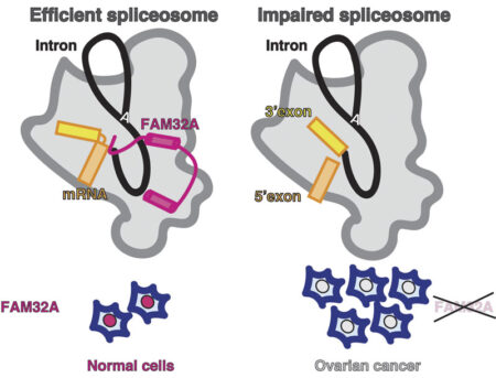 The tumour suppressor FAM32A is part of the active site of the spliceosome