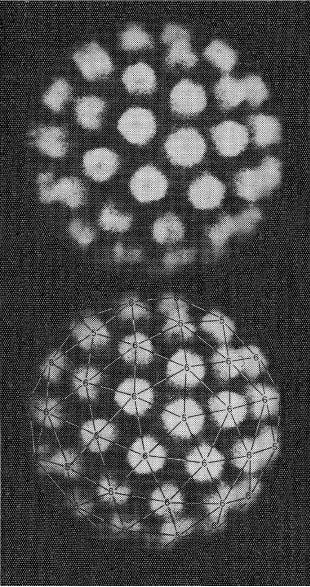3D image of human wart virus