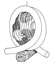 View of the nucleosome, the repeating unit of chromatin