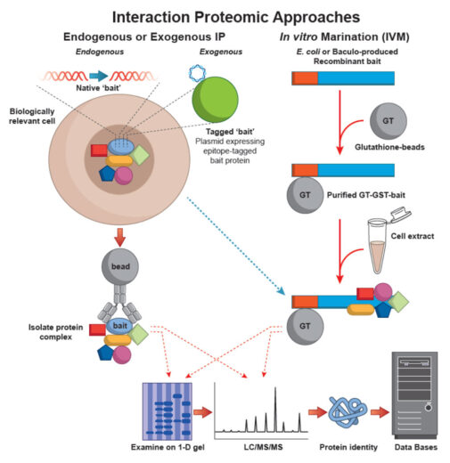 Interaction Proteomic Approaches