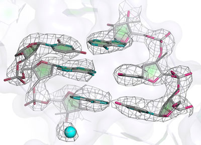 mitoribosome_structure_press-release2