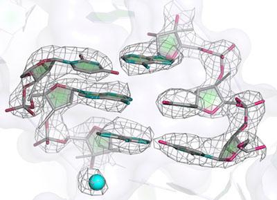 mitoribosome_structure_press-release2