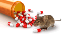 mouse with pill bottle