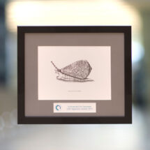 UAR openness award