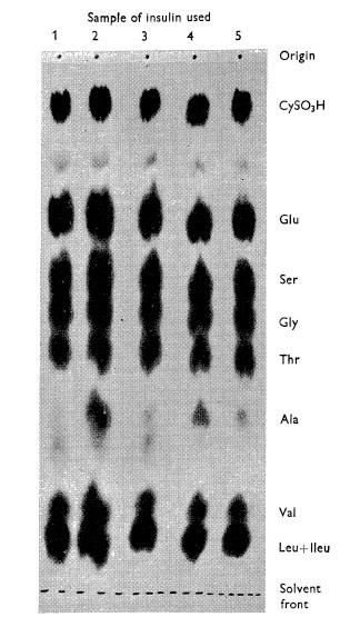Paper Chromatogram